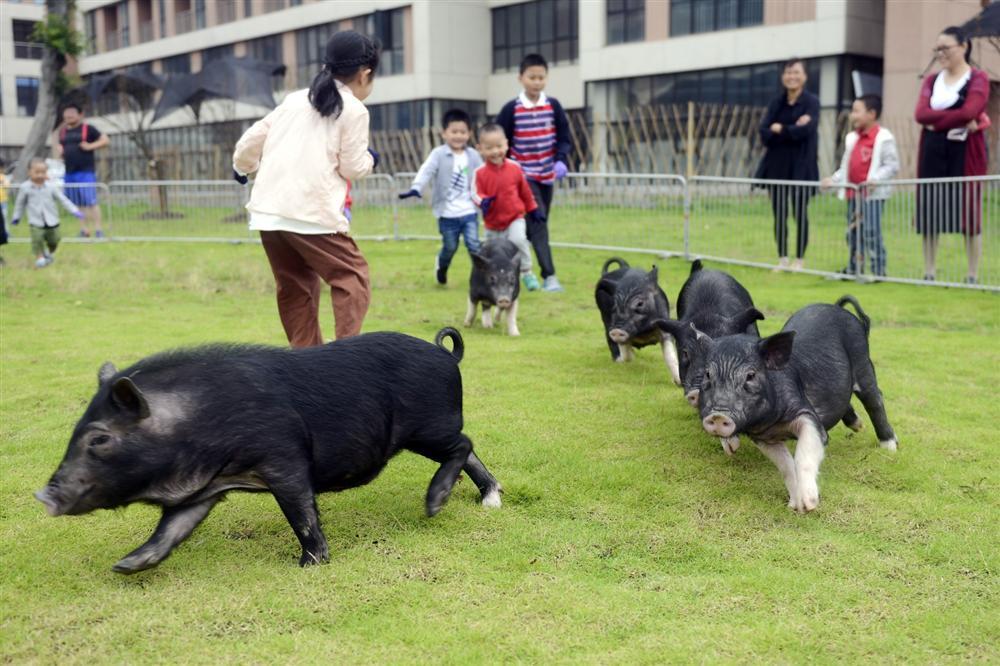 Công viên Hành tinh Lợn ở Trung Quốc hút khách dịp năm mới-3