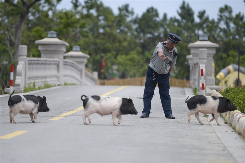 Công viên Hành tinh Lợn ở Trung Quốc hút khách dịp năm mới-4