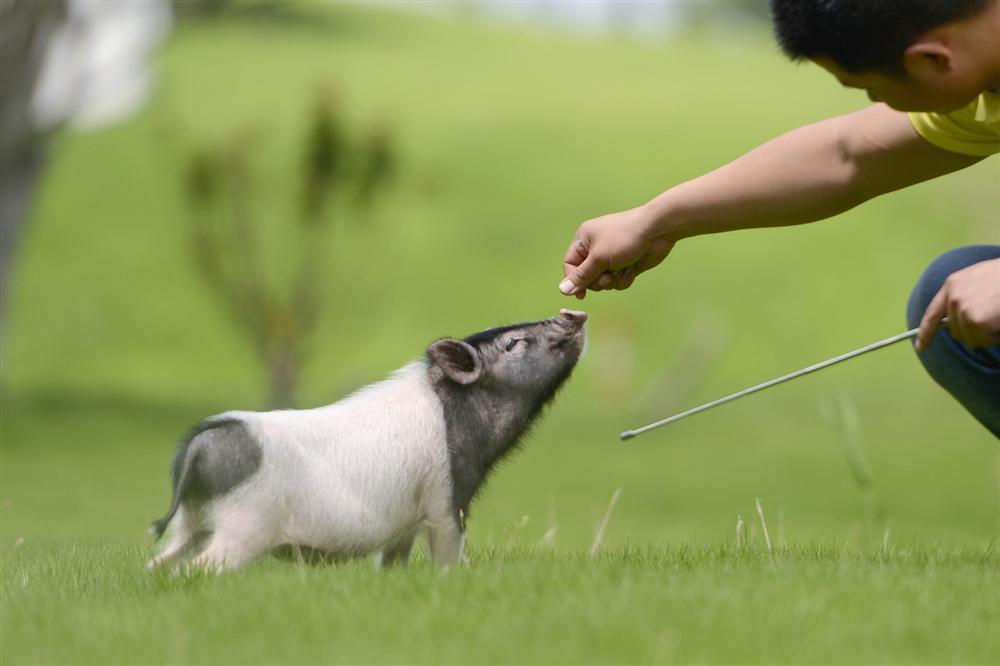 Công viên Hành tinh Lợn ở Trung Quốc hút khách dịp năm mới-7