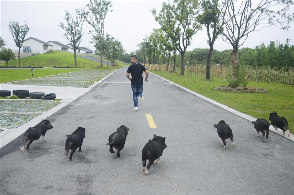 Công viên Hành tinh Lợn ở Trung Quốc hút khách dịp năm mới-8