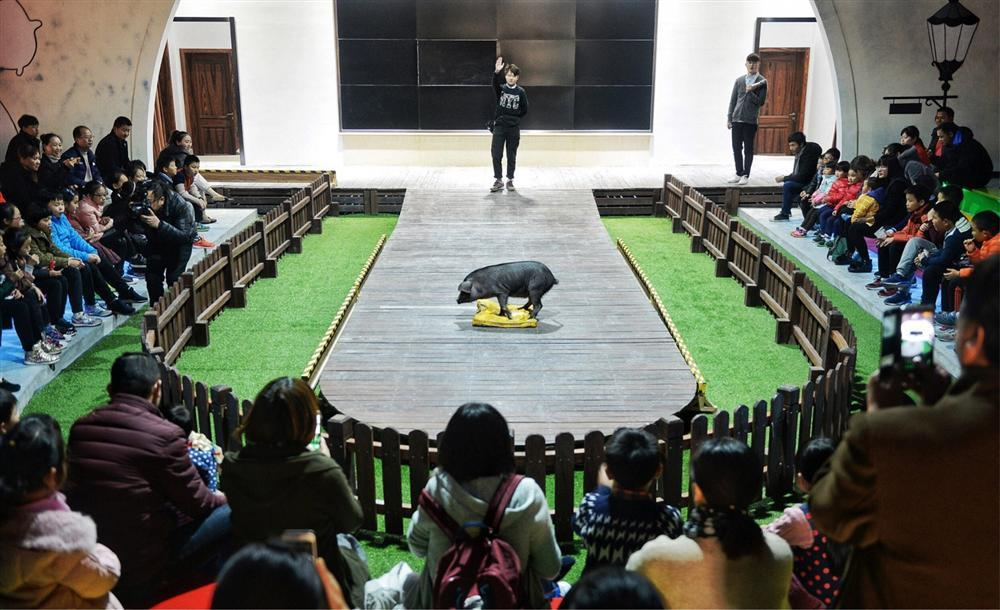 Công viên Hành tinh Lợn ở Trung Quốc hút khách dịp năm mới-11