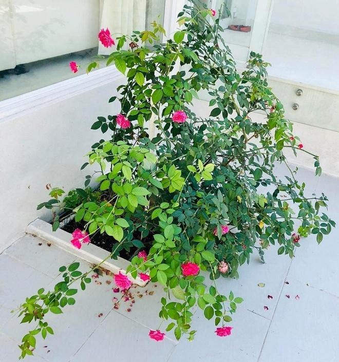 Biệt thự ngập sắc hoa đón Tết của vợ chồng Thủy Tiên - Công Vinh-11
