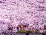Khám phá Tokyo, thành phố không ngủ của Nhật Bản-1