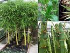 Đầu năm nhà nào có 1 trong 5 loài cây này trước cửa, gia đình sẽ tránh được hầu hết vận xui trong năm