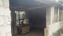 Thanh Hóa: Trưởng công an xã chết treo cổ ở chuồng trâu
