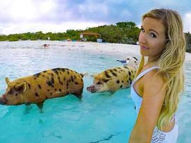 Mải tạo dáng, nữ người mẫu bất ngờ bị lợn cắn vòng 3