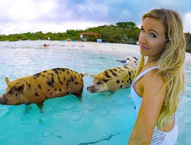 Mải tạo dáng, nữ người mẫu bất ngờ bị lợn cắn vòng 3-3