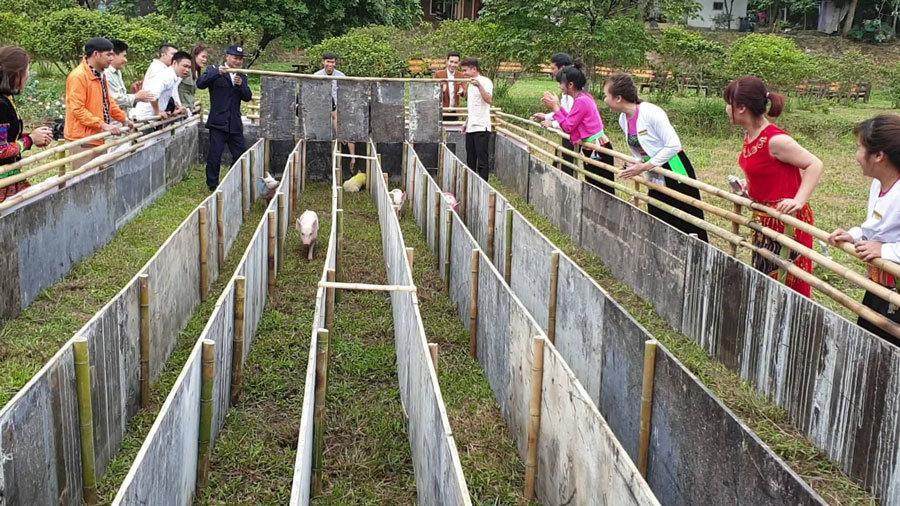 Cười vỡ bụng với màn đua lợn có 1-0-2 tại Ba Vì-7