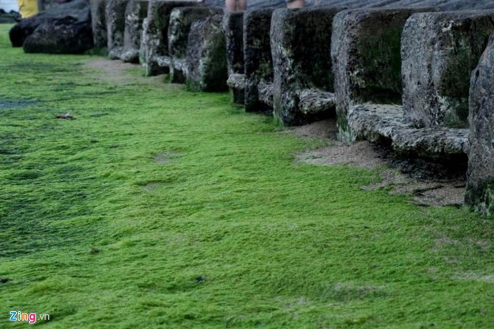 Đầu xuân rủ nhau check-in bãi rêu tuyệt đẹp ở Nha Trang-5