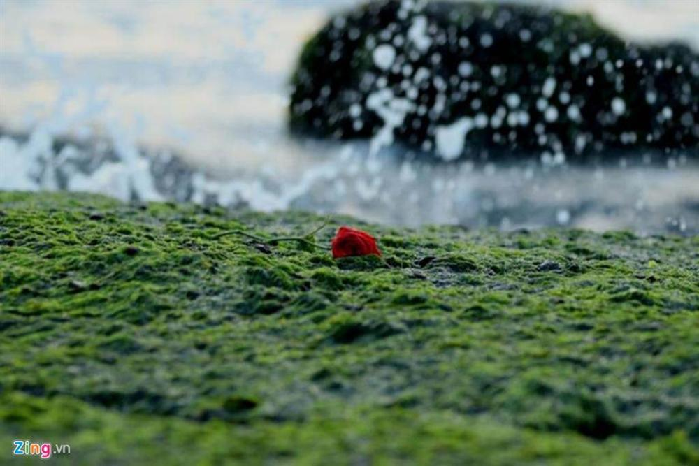 Đầu xuân rủ nhau check-in bãi rêu tuyệt đẹp ở Nha Trang-6