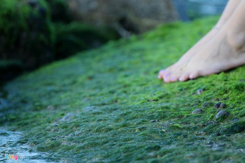 Đầu xuân rủ nhau check-in bãi rêu tuyệt đẹp ở Nha Trang-7