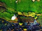 Đầu xuân rủ nhau check-in bãi rêu tuyệt đẹp ở Nha Trang