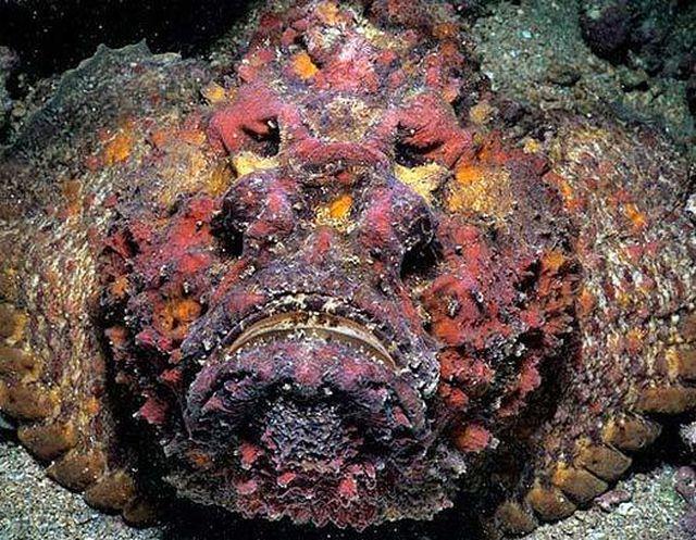 Từ Chúa tể nọc độc dưới đại dương tới món ăn có giá trị ẩm thực-1