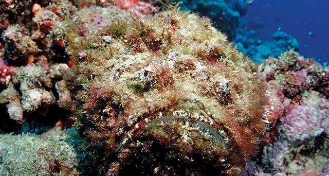 Từ Chúa tể nọc độc dưới đại dương tới món ăn có giá trị ẩm thực-2
