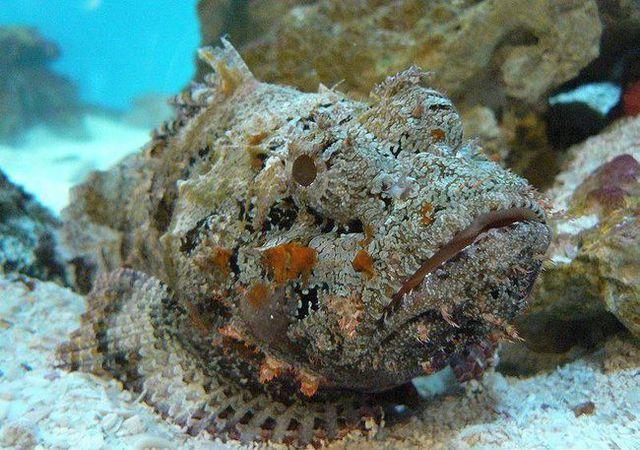 Từ Chúa tể nọc độc dưới đại dương tới món ăn có giá trị ẩm thực-3