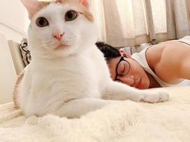 Harry Lu suýt bị trật khớp vai khi mải 'tự sướng' với mèo cưng