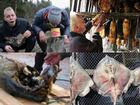 4 loài động vật lên men thối nhất thế giới nhưng tất cả đều được ăn ngon lành