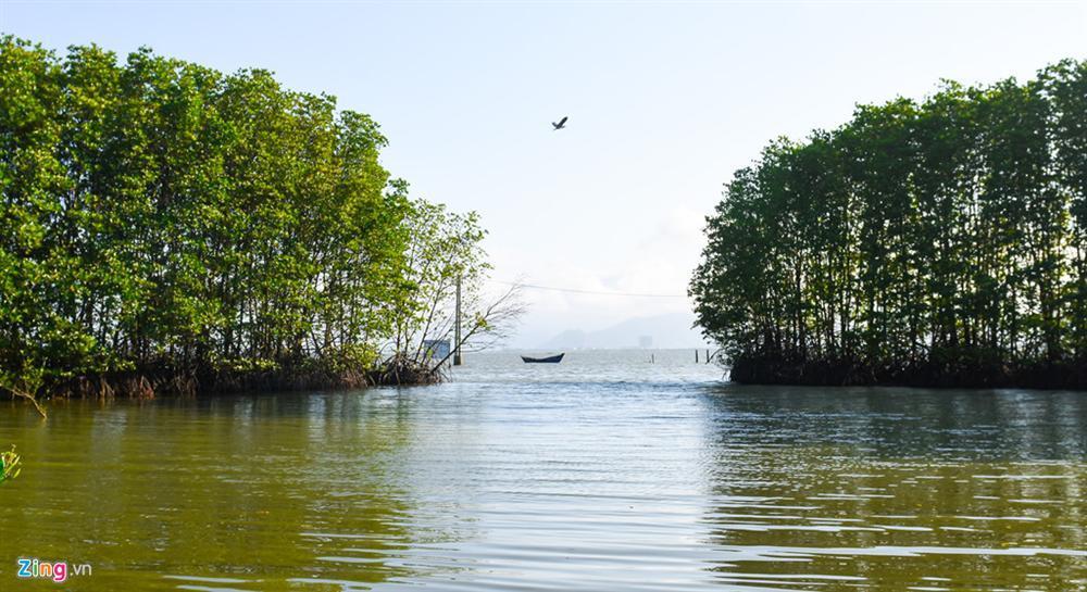 Cồn Chim - đảo ngọc sinh thái tuyệt mỹ bên phố biển Quy Nhơn-5