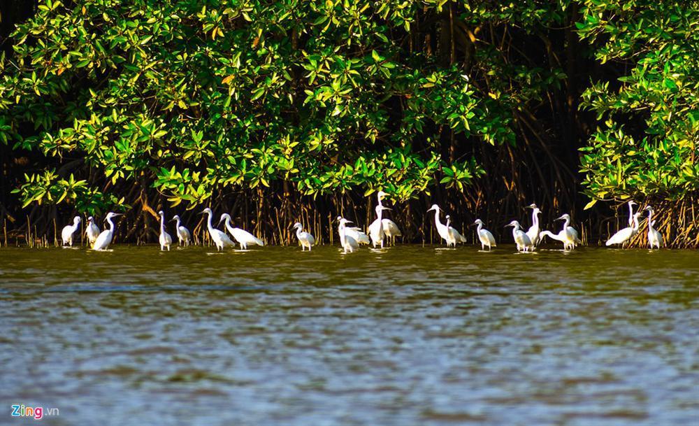 Cồn Chim - đảo ngọc sinh thái tuyệt mỹ bên phố biển Quy Nhơn-6