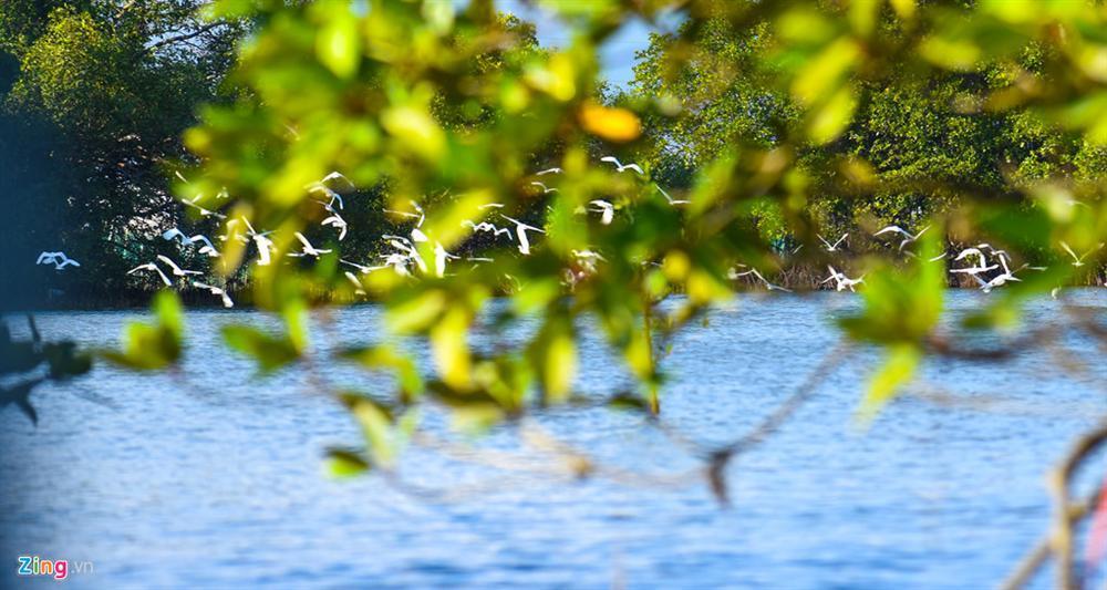 Cồn Chim - đảo ngọc sinh thái tuyệt mỹ bên phố biển Quy Nhơn-7