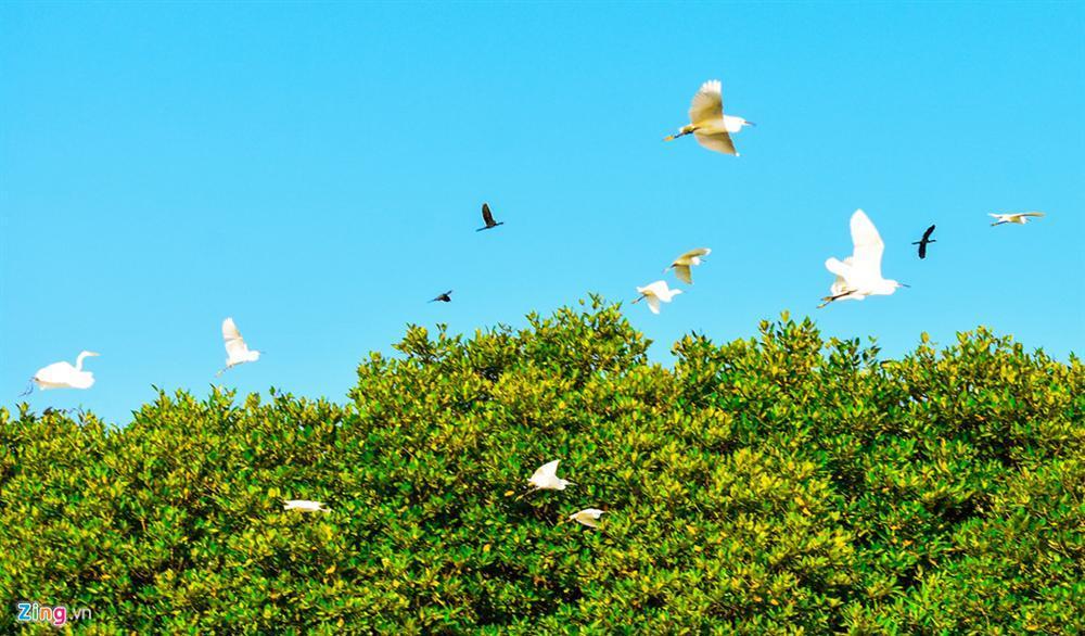 Cồn Chim – đảo ngọc sinh thái tuyệt mỹ bên phố biển Quy Nhơn