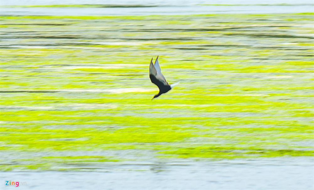 Cồn Chim - đảo ngọc sinh thái tuyệt mỹ bên phố biển Quy Nhơn-8