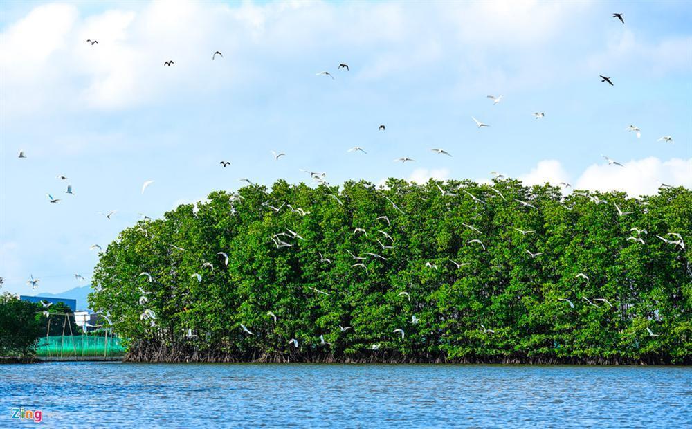 Cồn Chim - đảo ngọc sinh thái tuyệt mỹ bên phố biển Quy Nhơn-9