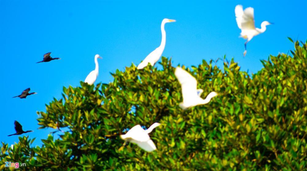 Cồn Chim - đảo ngọc sinh thái tuyệt mỹ bên phố biển Quy Nhơn-11