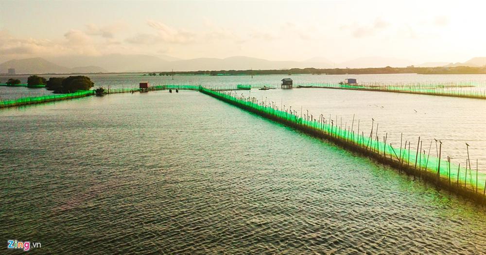Cồn Chim - đảo ngọc sinh thái tuyệt mỹ bên phố biển Quy Nhơn-14