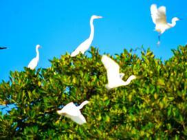 Cồn Chim - đảo ngọc sinh thái tuyệt mỹ bên phố biển Quy Nhơn