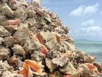 Bạn có muốn dành cả thanh xuân sống trên hòn đảo này để nhận lương lên tới 4 tỷ/năm?-6