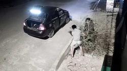 Cặp vợ chồng đi ô tô trộm đào lúc nửa đêm: 1 ngày sau, người vợ mang cây đến trồng lại vị trí cũ