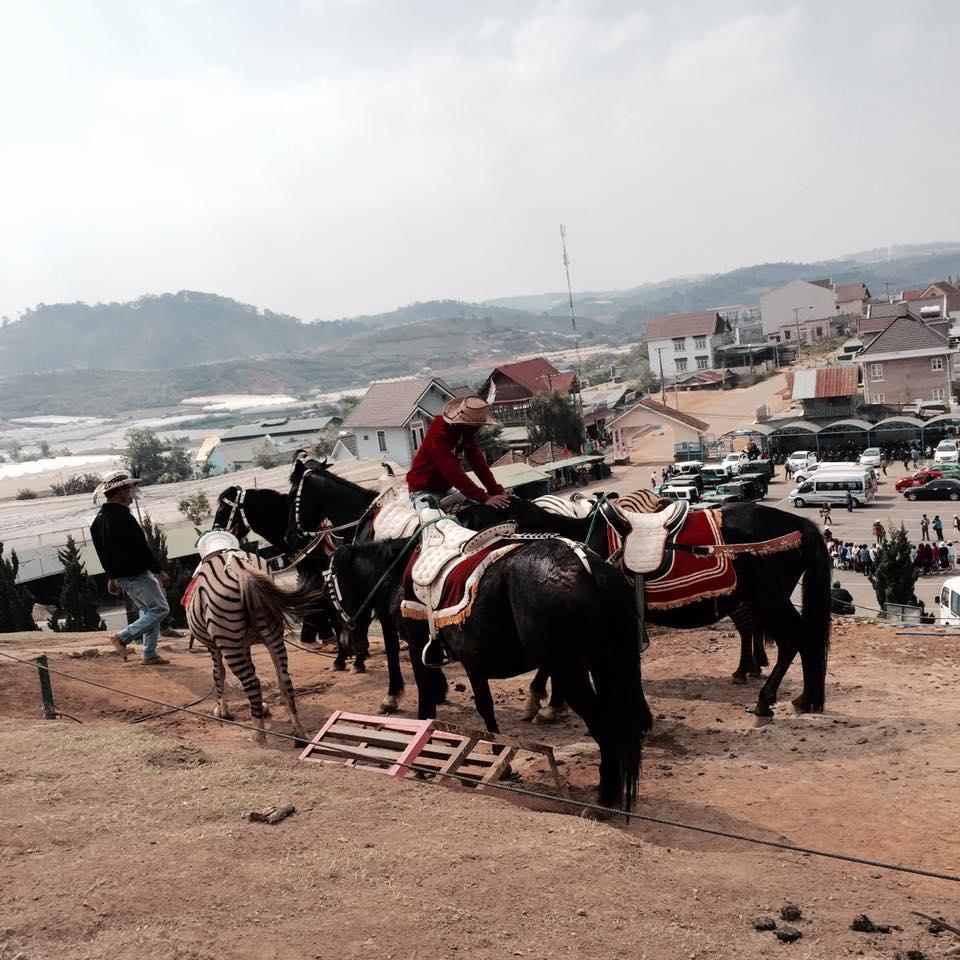 Du lịch Đà Lạt chỉ với 2,5 triệu anh chàng 9X khiến dân mạng trầm trồ không tin nổi-8