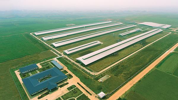Vinamilk nhập thêm hơn 1.600 bò sữa HF và A2 từ Mỹ-4