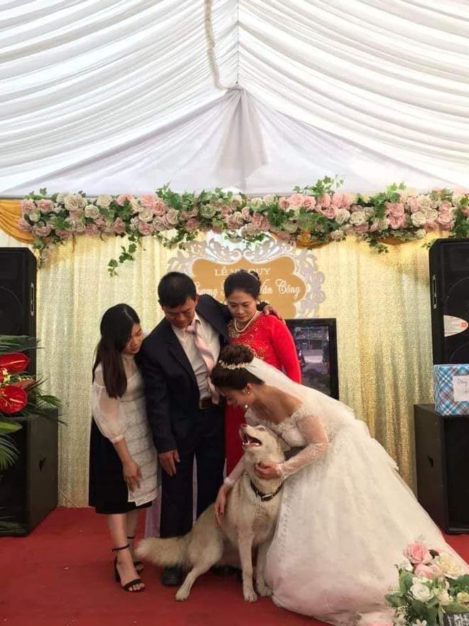 Bức ảnh hài nhất trong ngày: Thú cưng tranh thủ sống ảo lại còn nịnh nọt cô dâu để đứng giữa khung hình-2