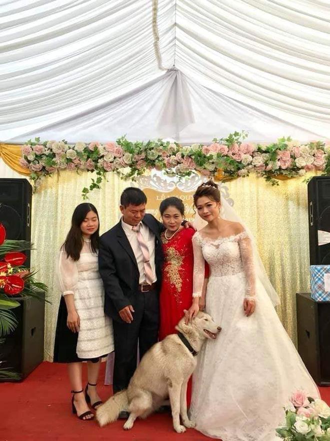 Bức ảnh hài nhất trong ngày: Thú cưng tranh thủ sống ảo lại còn nịnh nọt cô dâu để đứng giữa khung hình-3