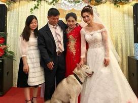 Bức ảnh hài nhất trong ngày: Thú cưng tranh thủ 'sống ảo' lại còn nịnh nọt cô dâu để đứng giữa khung hình