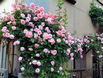 Khu vườn 'đẹp như cổ tích' của nữ Việt kiều ở Hungary