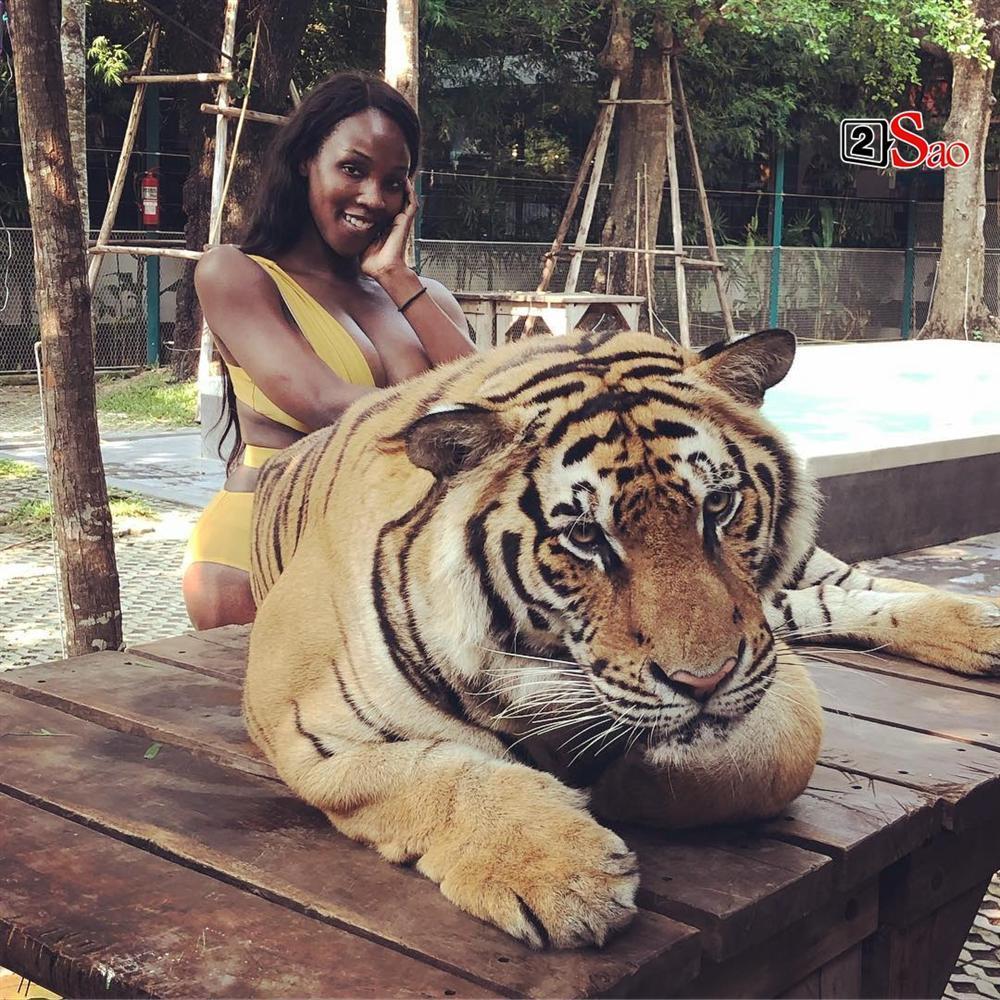 Diện bikini vào chuồng hổ uốn éo chụp hình, Hoa hậu Chuyển giới 2019 giật mình thon thót vì sợ bị ăn thịt-5