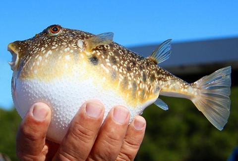 Cá thối, thịt ếch và những món ăn tiềm ẩn nguy cơ chết người-3