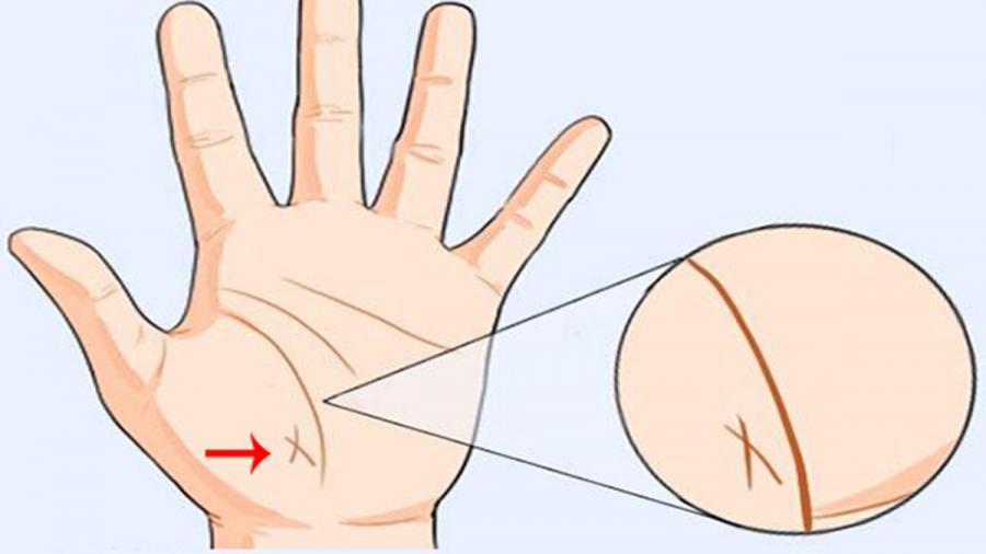 6 dấu hiệu TƯỚNG HỌC chỉ xuất hiện ở bàn tay người phụ nữ mang MỆNH PHƯỢNG HOÀNG, không giàu sang cũng phú quý-3