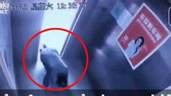 CLIP SỐC: Người đàn ông may mắn thoát chết khi thang máy chưa dừng lại vẫn đi vào