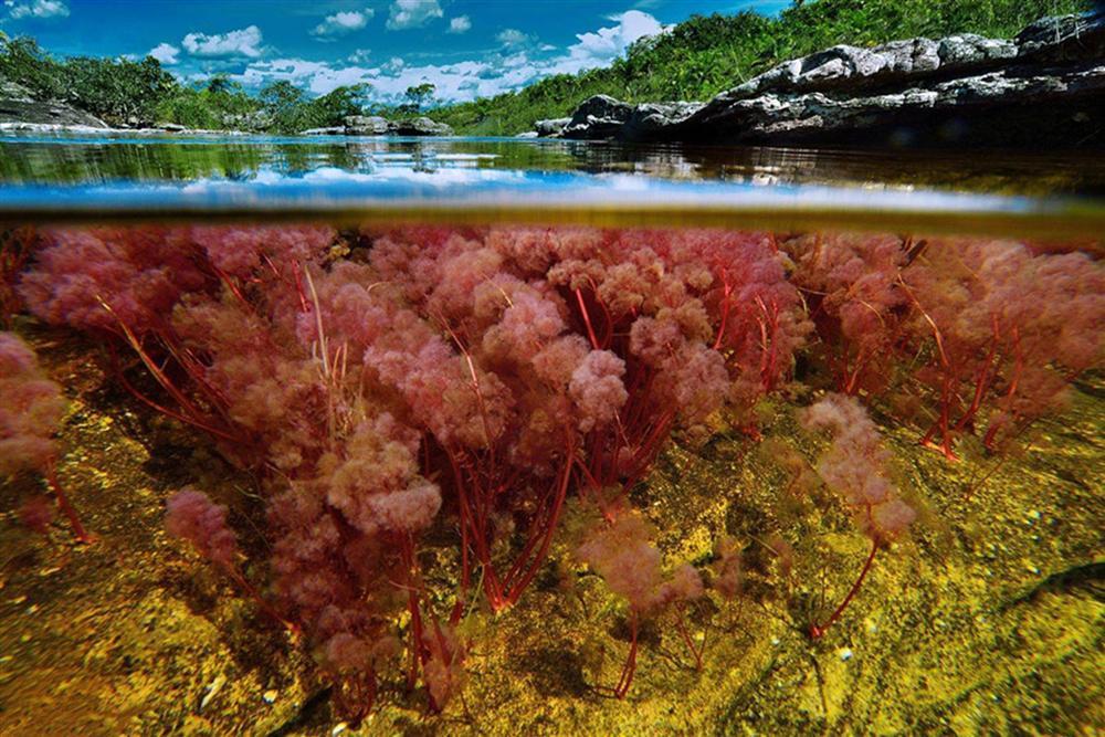 Dòng sông đẹp nhất thế giới chảy xuống từ thiên đường-4