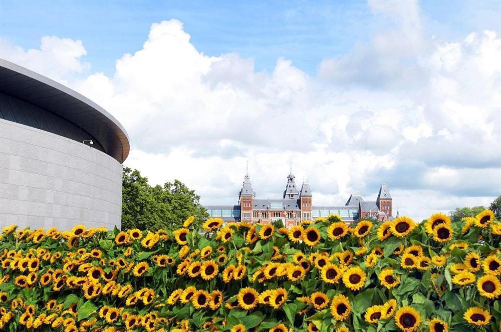 Mê cung hoa hướng dương đẹp xiêu lòng trước bảo tàng Van Gogh ở Hà Lan-1