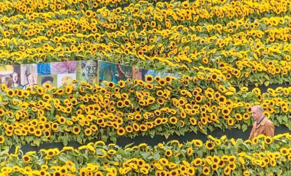 Mê cung hoa hướng dương đẹp xiêu lòng trước bảo tàng Van Gogh ở Hà Lan-2