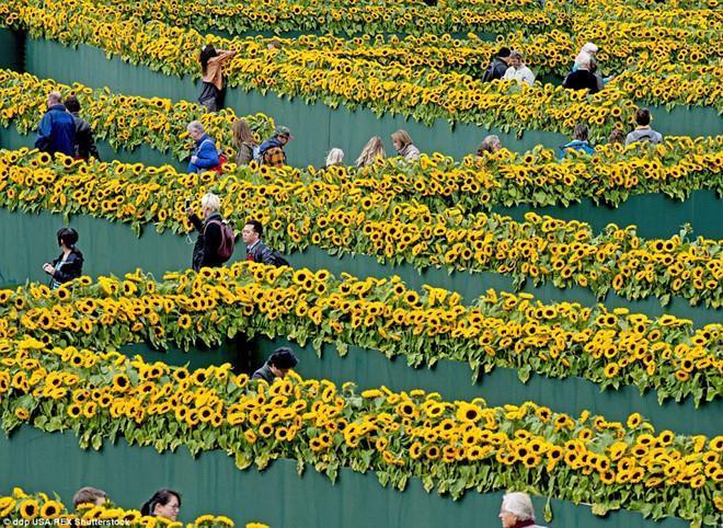 Mê cung hoa hướng dương đẹp xiêu lòng trước bảo tàng Van Gogh ở Hà Lan-3