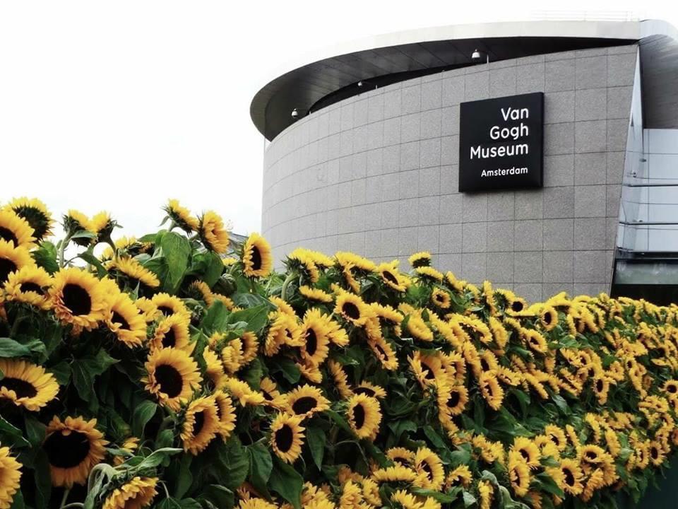 Mê cung hoa hướng dương đẹp xiêu lòng trước bảo tàng Van Gogh ở Hà Lan-5