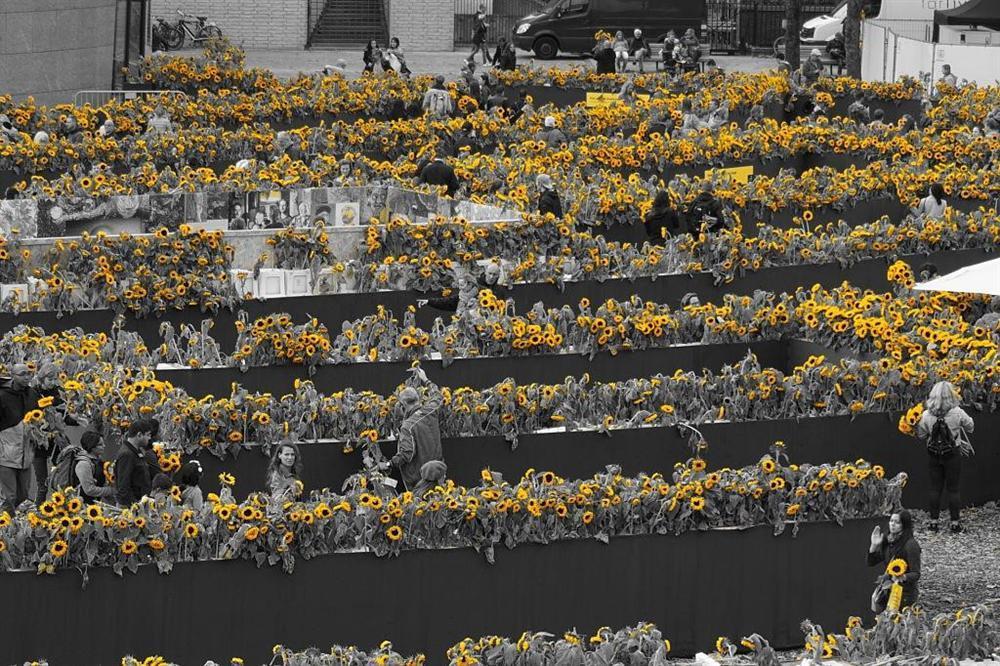 Mê cung hoa hướng dương đẹp xiêu lòng trước bảo tàng Van Gogh ở Hà Lan-6