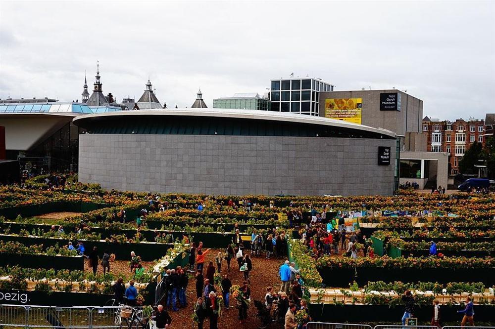 Mê cung hoa hướng dương đẹp xiêu lòng trước bảo tàng Van Gogh ở Hà Lan-7