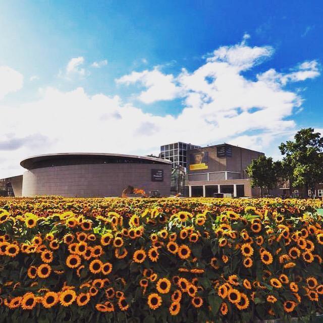 Mê cung hoa hướng dương đẹp xiêu lòng trước bảo tàng Van Gogh ở Hà Lan-8